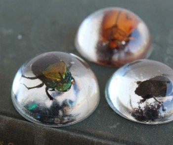 как сделать кулон из смолы с жуком в домашних условиях
