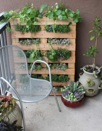 вертикальное озеленение на даче своими руками фото