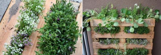 Вертикальное озеленение фото МК
