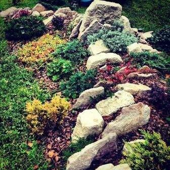 растения, которые высаживаются в рокарий