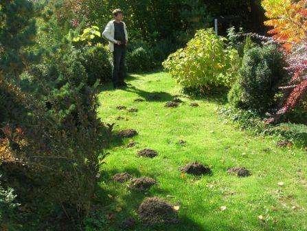 Какой вред от кротов на садовом участке