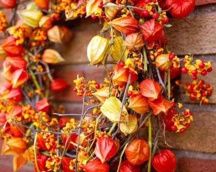 Например, на входную дверь можно повесить венок из этих красивых цветов в сочетании с веточками деревьев или ягодами