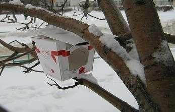 Столовой для птиц может с успехом служить обычная картонная коробка!