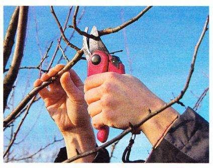 Когда температура воздуха будет выше нуля, можете приступить к обрезке деревьев. Очень важно откорректировать форму кроны и укоротить ветки до того как на них появятся почки или листочки.