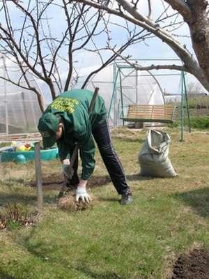 По всей территории сада или дачи вам придется убрать мусор: ветки, траву, опавшие осенью листья. Даже если вы проводили подобную уборку осенью, все равно найдется мусор, от которого стоит очистить участок.