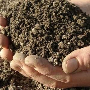 Оставляя каждый год одну и ту же почву в теплице, вы добьетесь увеличения численности бактерий и вредителей, что приведет к потере урожая. Чтобы этого не произошло, опытные садоводы советуют по завершении дачных работ обновлять почву, меняя ее на новую, и выполняя обработку тепличного грунта.