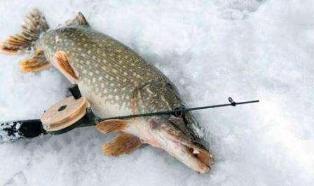 Как ловить щуку на балансир зимой