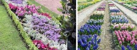Рабатка представляет собой плоский цветник, состоящий из разных растений. Вы можете рабатку расположить в центральной части большого цветника, тогда придется высаживать растения, чтобы они имели привлекательный внешний вид с двух сторон.
