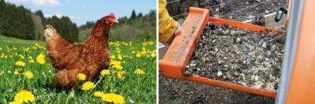 Теперь вы знаете, как приготовить удобрение из птичьего помета своими руками. Используйте натуральные удобрения