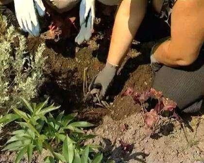 Налейте воду и высадите корень.