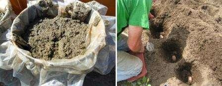 Всех интересует, как использовать сухой птичий помет как удобрение. Специалисты рекомендуют сначала обильно полить растения, а потом по поверхности рассыпать сухие экскременты.