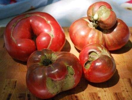 Любители натуральных домашних продуктов питания предпочитают народные методы для обработки томатов. Такие способы безопасные и достаточно эффективные. Вы можете выбрать для себя наиболее подходящий метод.