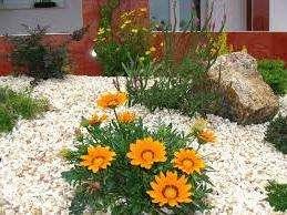 Поздняя посадка. Старайтесь не высаживать сразу в грунт семена, лучше выращивайте рассадой. Время от высадки семян до цветения составляет до 100 дней, поэтому гацания может просто не успеть зацвести до заморозков, если вы ее поздно посадили