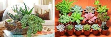 Родина суккулентов – страны с жарким климатом, поэтому неудивительно, что у этих растений толстые листья, хранящие запасы воды. Если вы не умеете выращивать растения, не переживайте. Даже если забыть о суккулентах