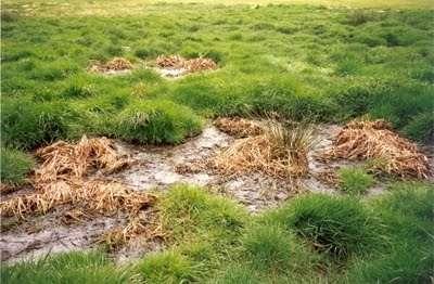 Монтаж септика в болотистой местности довольно усложняется. Септик обязательно устанавливается на подушку из бетона и закрепляется специальными удерживающими тросами, либо канатами, иначе он может всплыть на поверхность