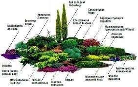 Альпийская горка похожа на мини-скалу, а значит, в основу будущей композиции лягут камни и низкорослые растения.