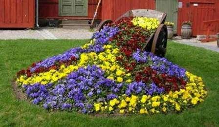 Для осеннего украшения клумбы высаживаются гелениумы, золотарники и рудбекии.