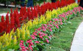 Растения в цветнике нельзя сажать очень близко друг к другу – это в будущем может привести к гибели кого-то из них.