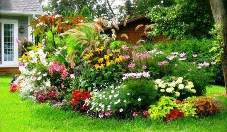 Неприхотливые растения легко приживаются на любой клумбе в саду, а также в тени возле дома, на почве с проблемным грунтом и при повышенной засушливости летом. Они не вымерзают зимой, не подвергаются болезням, а также вредителям