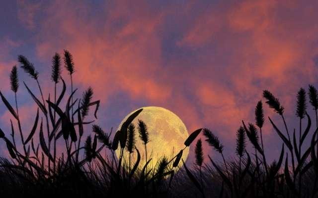 Правила по посадке растений по лунной таблице