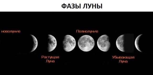 Основное правило посадки культур по лунному календарю сводится к молодой и убывающей Луне.