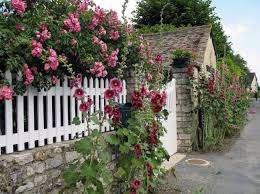 Посадку розы шток на дачном участке нужно проводить в теплую погоду, когда уже прошли все осенние заморозки.
