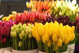 Когда бутон начнёт окрашиваться в определённый цвет, можно подумать о срезке цветов. После этого поставим их в воду +1 – +4 градуса, так они простоят около 7 дней. Если нужно хранить больше по срокам, тогд