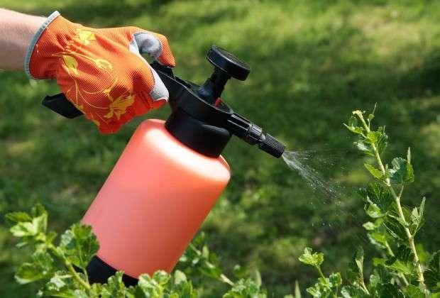чем опрыскивать деревья в саду весной