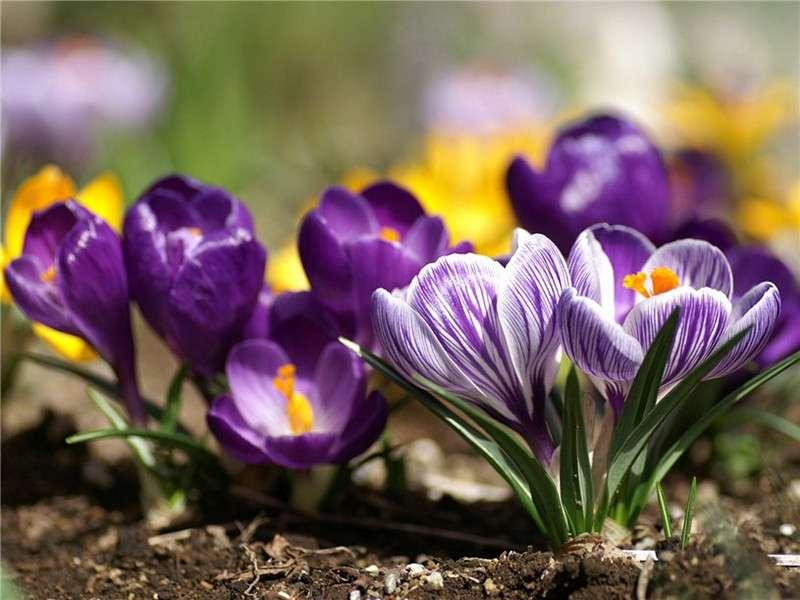 низкорослые многолетники цветущие все лето фото с названиями