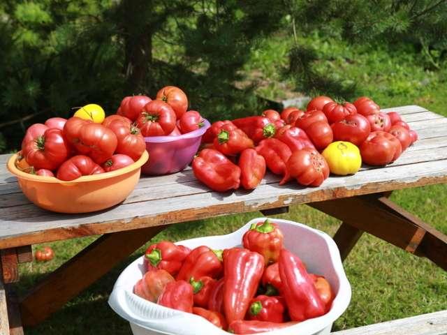 народные средства для подкормки рассады томатов
