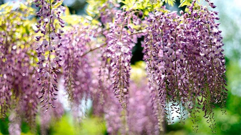 неприхотливые многолетние кустарники цветущие все лето