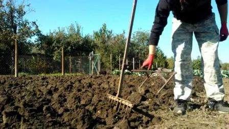 При копании тяжесть работы заключается в том, что приходится прикладывать усилия при вдавливании лопаты в землю, затем поднимать помимо тяжести лопаты еще и массу переворачиваемой земли. Лопата для лен
