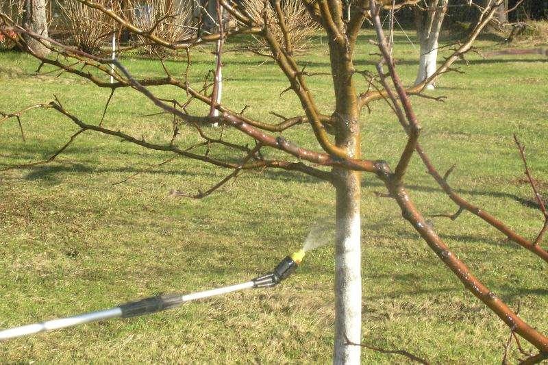 чем опрыскивать сад весной до распускания почек
