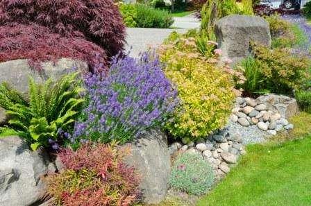 На первых порах лучше работать с растениями, неприхотливыми в уходе. Чтоб выделить группы цветов, их следует высаживать более густо. Этот прием помогает избежать смешения растений, что приводит к утере эстети