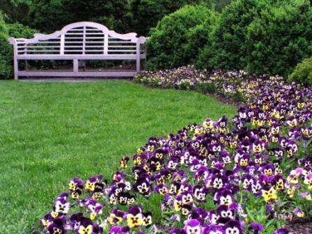 оно-цветник – идеальный вариант для неопытных цветоводов. На клумбе высаживаются растения одного вида.