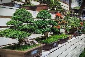 Используемые древесные породы тоже влияют на общий вид получившегося дерева бонсай. Например, хвойная порода будет круглый год радовать глаз, так как у нее нет листьев, которые могли бы опадать. Бонс