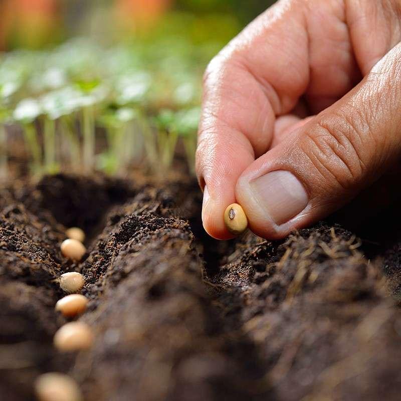 как правильно выбирать семена