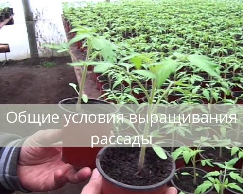 Общие условия выращивания рассады | унный календарь в таблице 2021 svoimi-rukamy.com